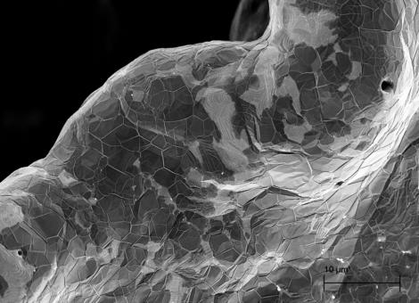 3D Graphene Nickel Foam SEM - 5 K X