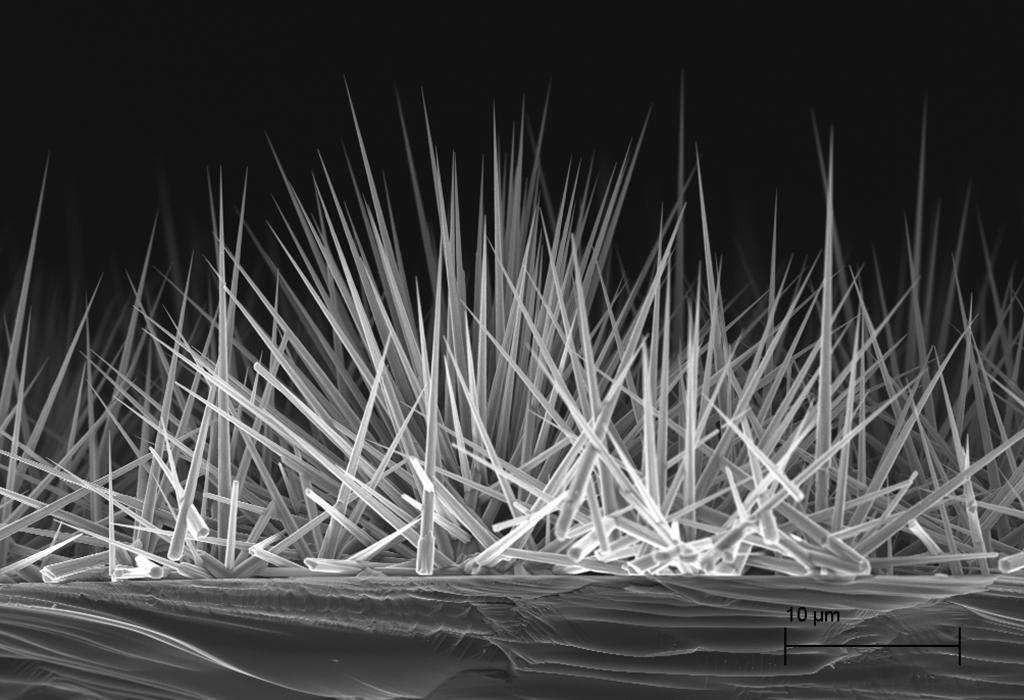 Zinc Oxide Nanowires Cvd Equipment Corporation